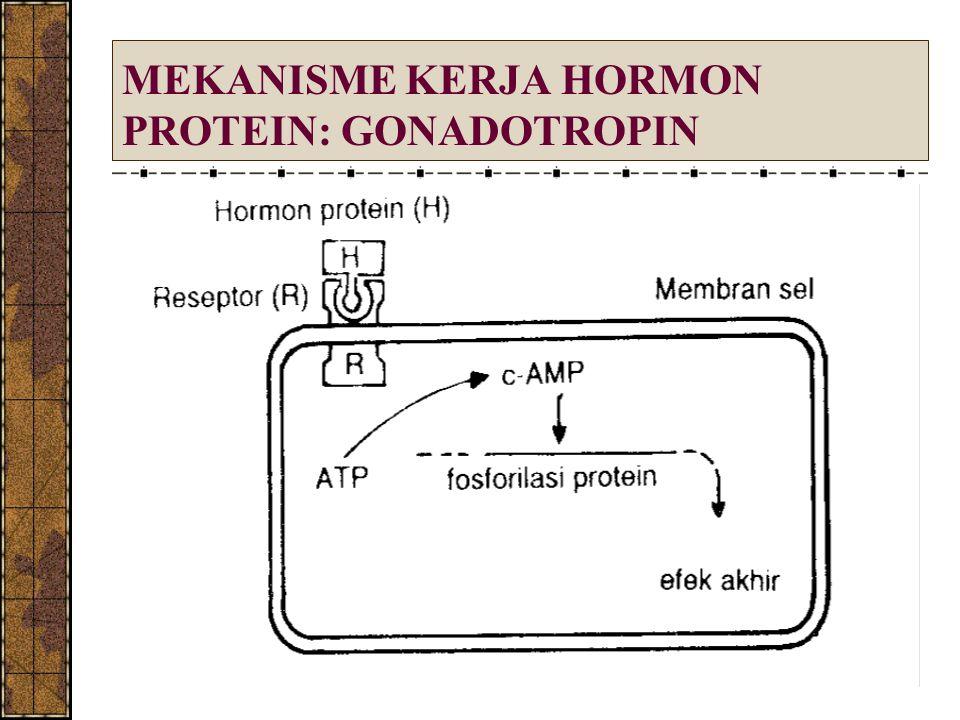MEKANISME KERJA HORMON PROTEIN: GONADOTROPIN