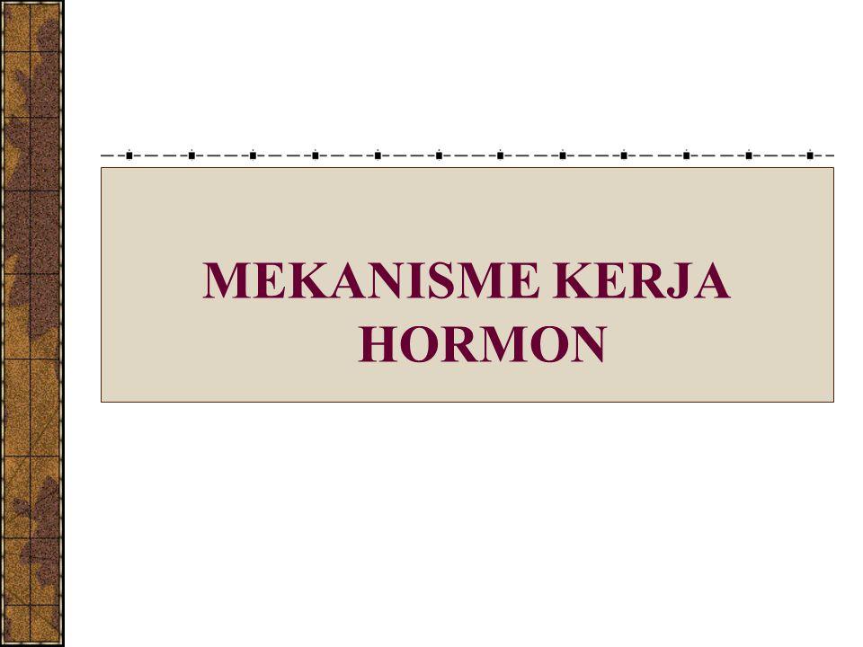 MEKANISME KERJA HORMON PROTEIN Reseptor hormon protein bersifat spesifik dan terdpt pada membran plasma sel target.