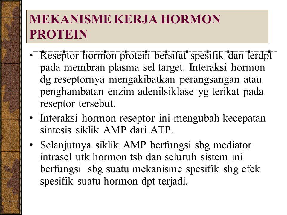 MEKANISME KERJA HORMON PROTEIN Reseptor hormon protein bersifat spesifik dan terdpt pada membran plasma sel target. Interaksi hormon dg reseptornya me