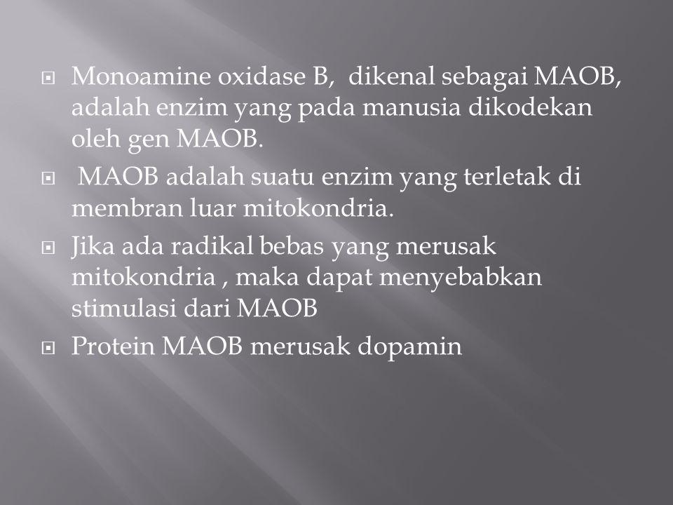  Monoamine oxidase B, dikenal sebagai MAOB, adalah enzim yang pada manusia dikodekan oleh gen MAOB.  MAOB adalah suatu enzim yang terletak di membra