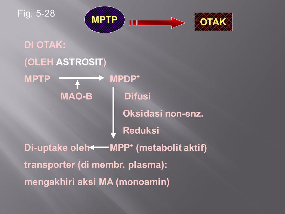 Fig. 5-28 MPTP OTAK DI OTAK: (OLEH ASTROSIT) MPTPMPDP + MAO-B Difusi Oksidasi non-enz. Reduksi Di-uptake olehMPP + (metabolit aktif) transporter (di m