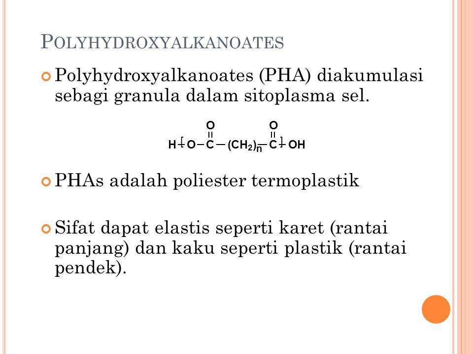 P OLYHYDROXYALKANOATES Polyhydroxyalkanoates (PHA) diakumulasi sebagi granula dalam sitoplasma sel. PHAs adalah poliester termoplastik Sifat dapat ela