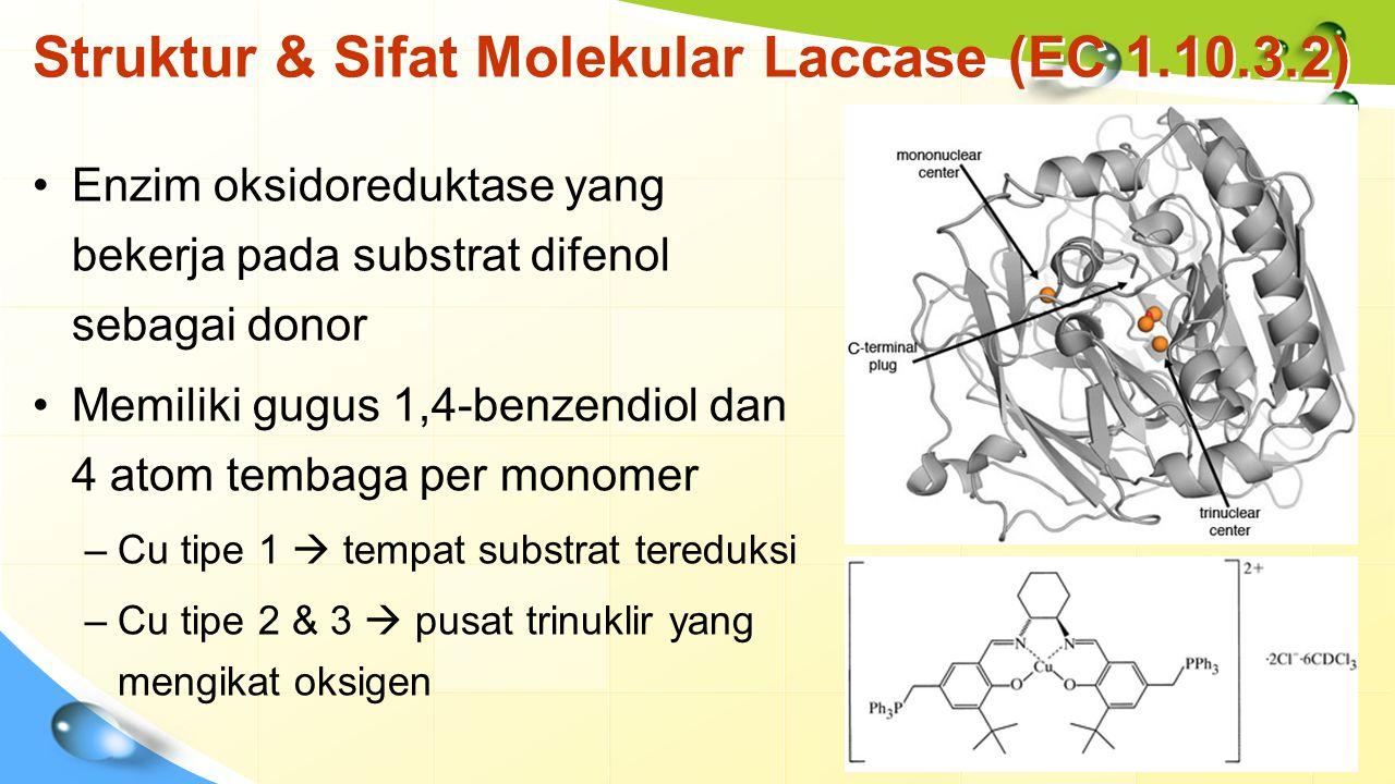 Mekanisme katalisis Laccase Radikal bereaksi dengan Laccase/ nonenzimatik Substrat tereduksi  radikal bebas O2 teroksidasi  H2O e - ditransfer dari T1  T2  T3 Laccase menyerang gugus fenolik substrat Katalisis substrat non-fenolik:  Bantuan mediator  HOBT, NHPI, ABTS dan 3-asam hidroksianthranilik