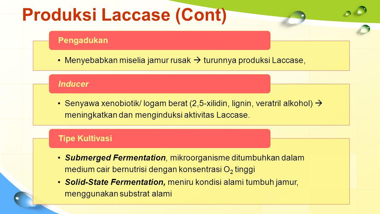 Produksi Laccase (Cont) Menyebabkan miselia jamur rusak  turunnya produksi Laccase, Pengadukan Senyawa xenobiotik/ logam berat (2,5-xilidin, lignin,