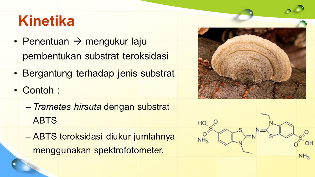Kinetika (Cont.) Sangat bergantung pada substrat substrat fenol : antara 3-7 (dari jamur), di atas 9 (dari tumbuhan) subtrat ABTS :antara 3-5 pH optimum Temperatur optimum Anion kecil (halida, azida, sianida, dan hidroksida) menghasilkan gangguan terhadap transfer elektron Asam tioglikolik, dietiltiokarbamat, ion logam, asam lemak dan reagen sulfuhidril juga menurunkan aktivitas Laccase Inhibitor Faktor yang mempengaruhi aktivitas Laccase