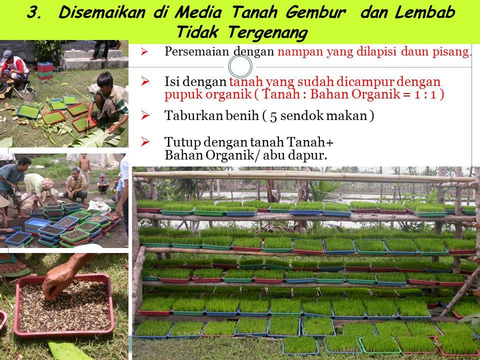 3. Disemaikan di Media Tanah Gembur dan Lembab Tidak Tergenang PPersemaian dengan nampan yang dilapisi daun pisang. IIsi dengan tanah yang sudah d