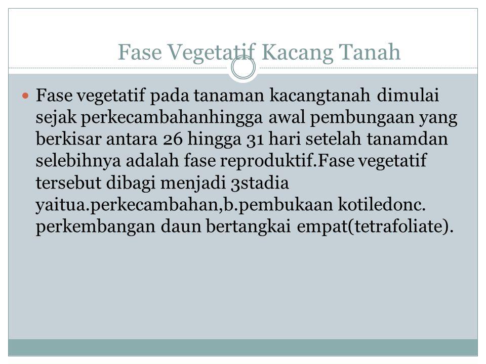 Fase Vegetatif Kacang Tanah Fase vegetatif pada tanaman kacangtanah dimulai sejak perkecambahanhingga awal pembungaan yang berkisar antara 26 hingga 31 hari setelah tanamdan selebihnya adalah fase reproduktif.Fase vegetatif tersebut dibagi menjadi 3stadia yaitua.perkecambahan,b.pembukaan kotiledonc.