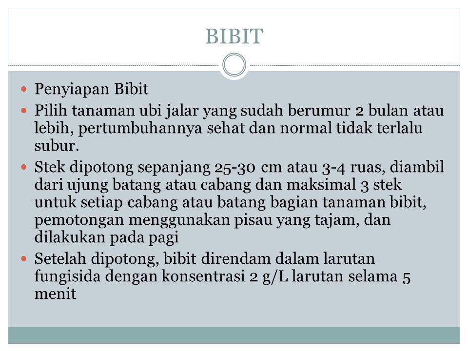 BIBIT Penyiapan Bibit Pilih tanaman ubi jalar yang sudah berumur 2 bulan atau lebih, pertumbuhannya sehat dan normal tidak terlalu subur.