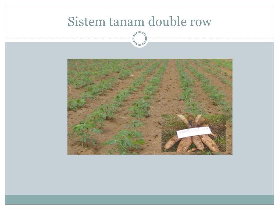 Sistem tanam double row