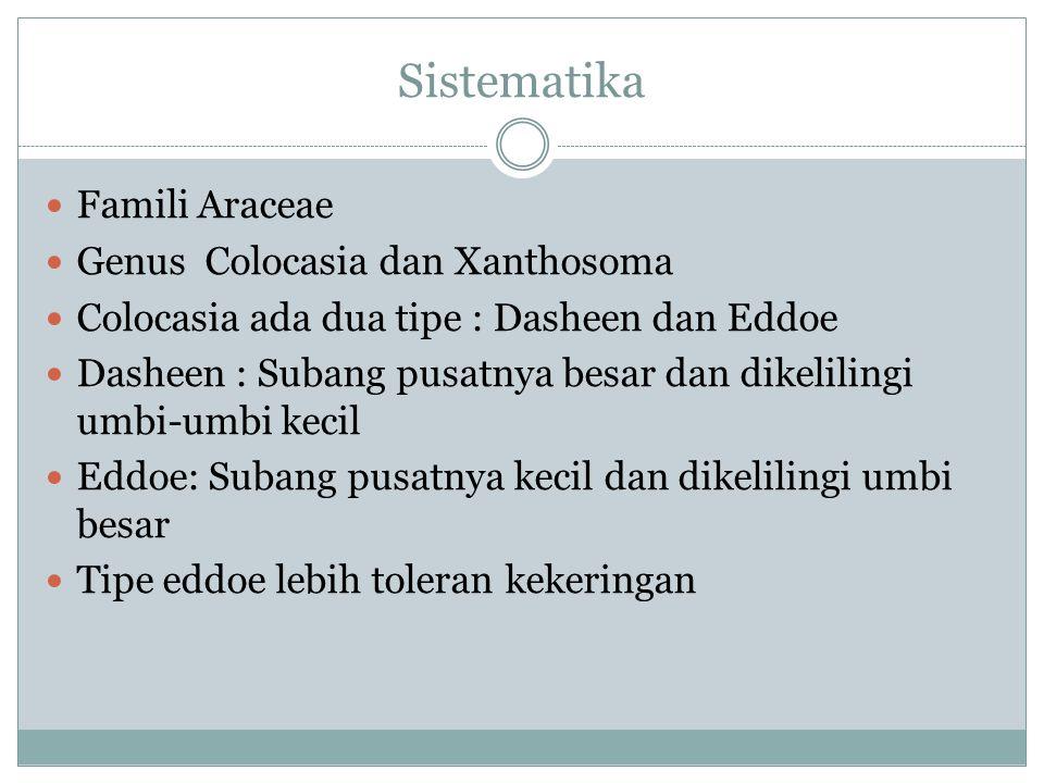 Sistematika Famili Araceae Genus Colocasia dan Xanthosoma Colocasia ada dua tipe : Dasheen dan Eddoe Dasheen : Subang pusatnya besar dan dikelilingi umbi-umbi kecil Eddoe: Subang pusatnya kecil dan dikelilingi umbi besar Tipe eddoe lebih toleran kekeringan