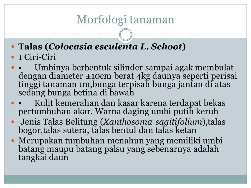 Morfologi tanaman Talas (Colocasia esculenta L.