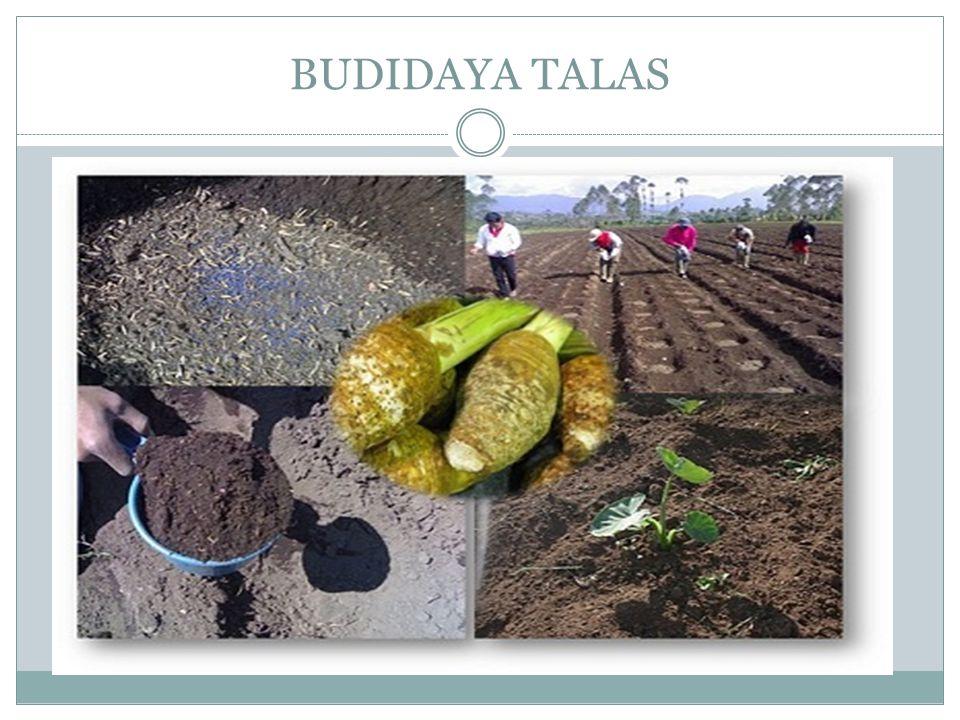BUDIDAYA TALAS