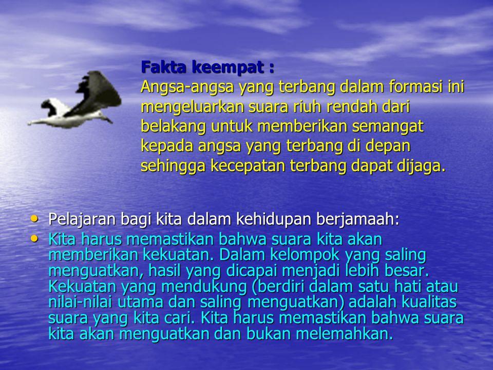 Fakta kelima : Ketika seekor angsa menjadi sakit, terluka, atau ditembak jatuh, dua angsa lain akan ikut keluar dari formasi bersama angsa tersebut dan mengikutinya terbang turun untuk membantu dan melindungi.