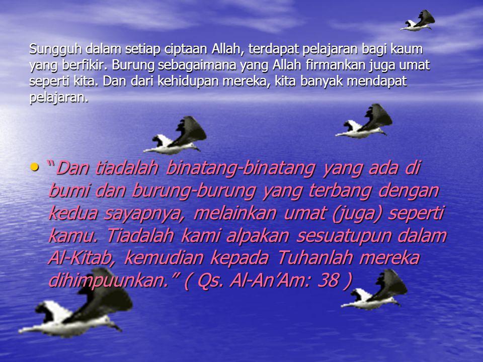 Sungguh dalam setiap ciptaan Allah, terdapat pelajaran bagi kaum yang berfikir. Burung sebagaimana yang Allah firmankan juga umat seperti kita. Dan da