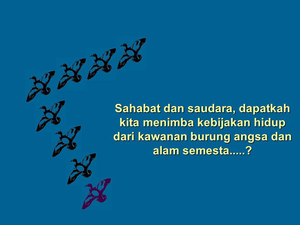 Sahabat dan saudara, dapatkah kita menimba kebijakan hidup dari kawanan burung angsa dan alam semesta.....?