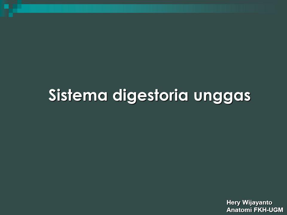 Sistema digestoria terdiri dari struktur yang bertugas untuk ingesti makanan, penelanan, persiapan digesti makanan, digesti, absorpsi, dan expulsi makanan yang tidak terabsorpsi.