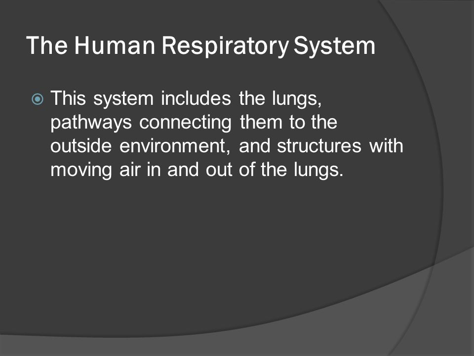 The Human Respiratory System  This system includes the lungs, pathways connecting them to the outside environment, and structures with moving air in