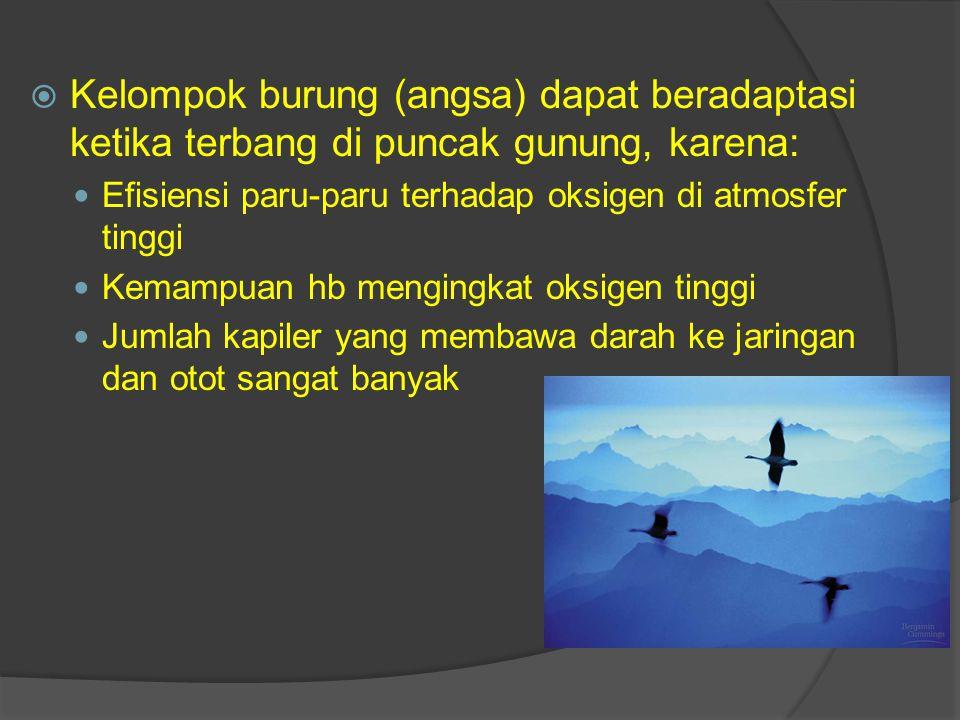  Kelompok burung (angsa) dapat beradaptasi ketika terbang di puncak gunung, karena: Efisiensi paru-paru terhadap oksigen di atmosfer tinggi Kemampuan