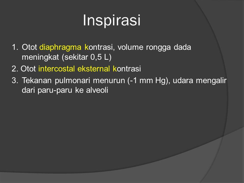 Inspirasi 1.Otot diaphragma kontrasi, volume rongga dada meningkat (sekitar 0,5 L) 2. Otot intercostal eksternal kontrasi 3.Tekanan pulmonari menurun