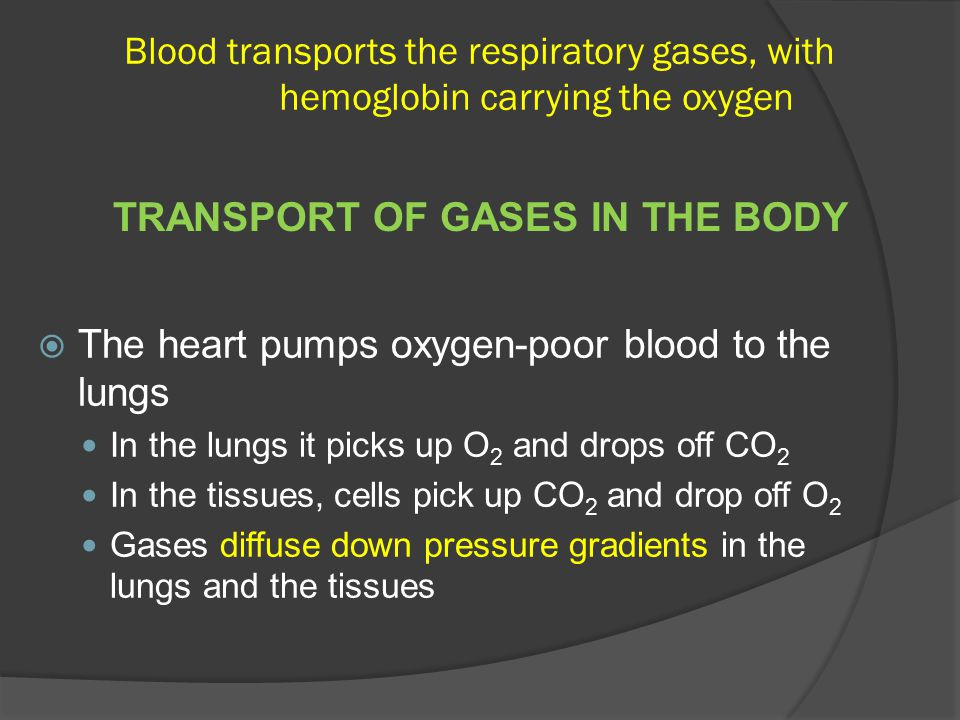 Blood transports the respiratory gases, with hemoglobin carrying the oxygen  The heart pumps oxygen-poor blood to the lungs In the lungs it picks up O 2 and drops off CO 2 In the tissues, cells pick up CO 2 and drop off O 2 Gases diffuse down pressure gradients in the lungs and the tissues TRANSPORT OF GASES IN THE BODY