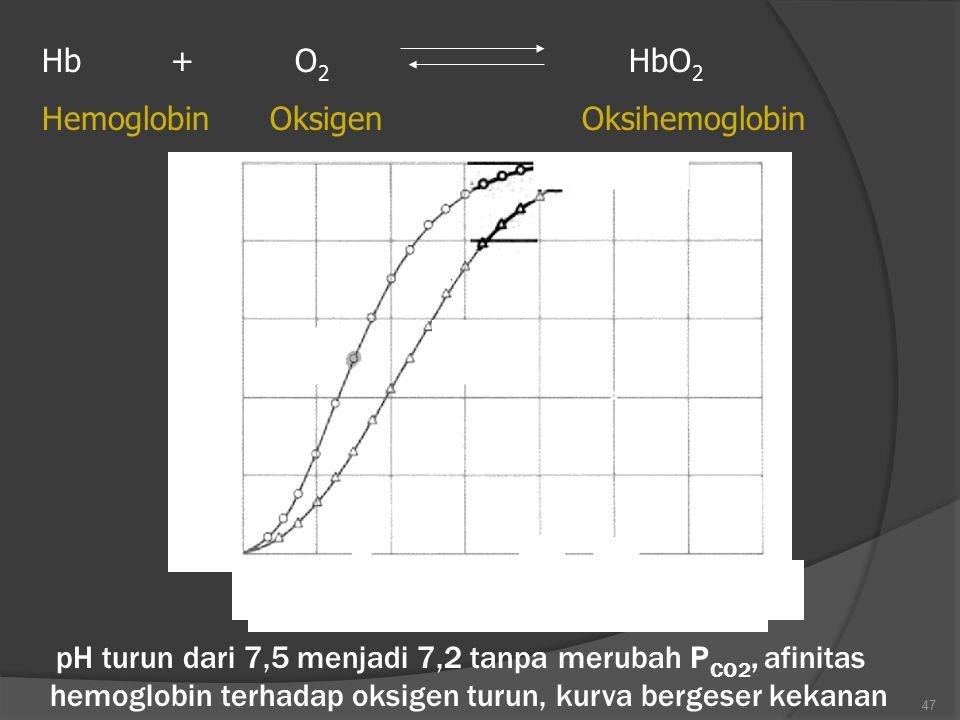 47 Hb + O 2 HbO 2 Hemoglobin Oksigen Oksihemoglobin 100 80 60 40 20 20 40 60 80 100 120 Tekanan oksigen (mmHg) (a) pH 7,5 (a) pH 7,2 pH turun dari 7,5
