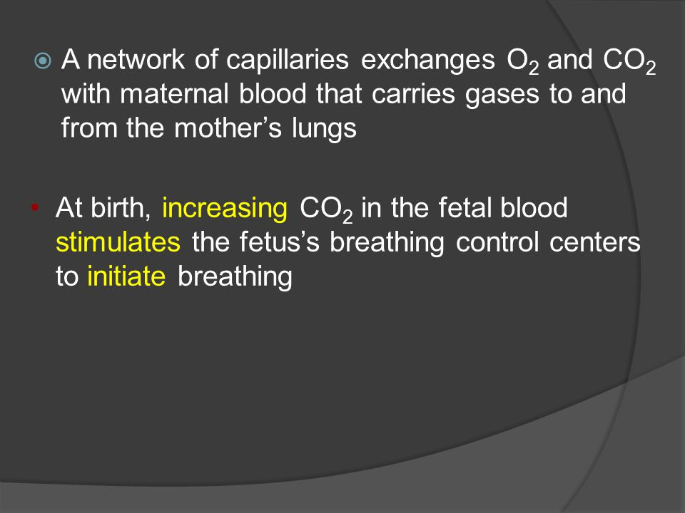 A network of capillaries exchanges O 2 and CO 2 with maternal blood that carries gases to and from the mother's lungs At birth, increasing CO 2 in the fetal blood stimulates the fetus's breathing control centers to initiate breathing