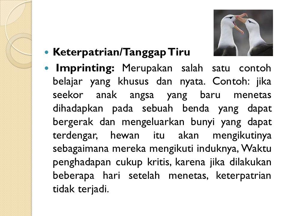 Keterpatrian/Tanggap Tiru Imprinting: Merupakan salah satu contoh belajar yang khusus dan nyata. Contoh: jika seekor anak angsa yang baru menetas diha