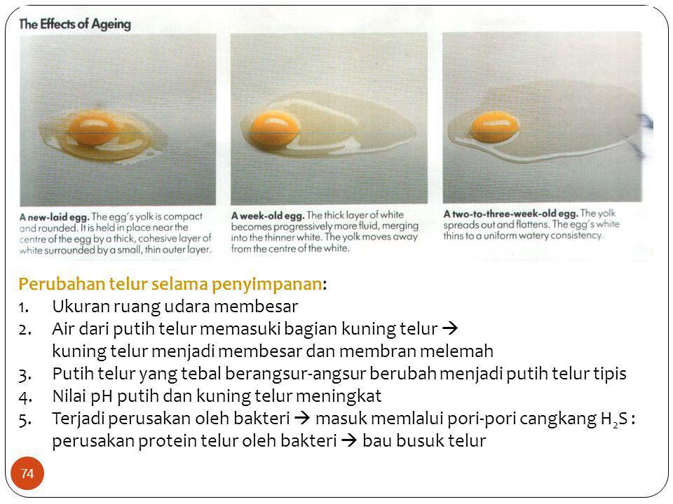 Perubahan telur selama penyimpanan: 1.Ukuran ruang udara membesar 2.Air dari putih telur memasuki bagian kuning telur  kuning telur menjadi membesar