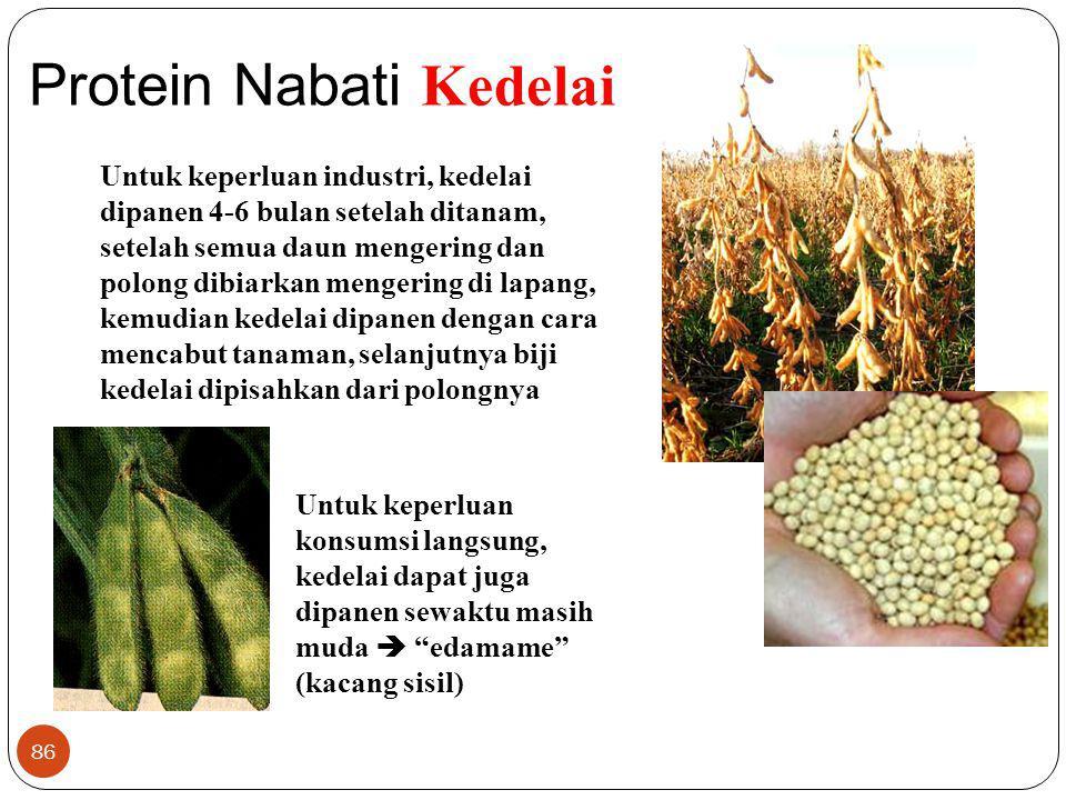 86 Protein Nabati Kedelai Untuk keperluan industri, kedelai dipanen 4-6 bulan setelah ditanam, setelah semua daun mengering dan polong dibiarkan menge