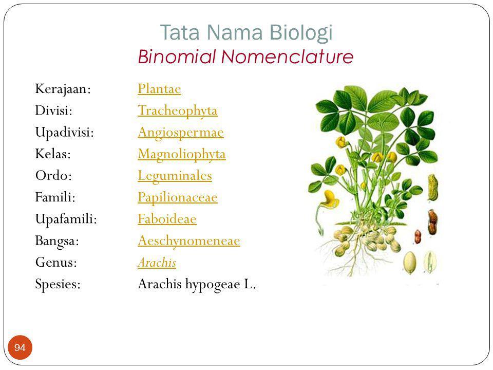 Kerajaan:Plantae Divisi:Tracheophyta Upadivisi:Angiospermae Kelas:Magnoliophyta Ordo:Leguminales Famili:Papilionaceae Upafamili:Faboideae Bangsa:Aesch