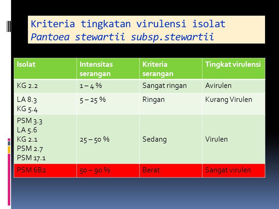 Kriteria tingkatan virulensi isolat Pantoea stewartii subsp.stewartii IsolatIntensitas serangan Kriteria serangan Tingkat virulensi KG 2.21 – 4 %Sanga