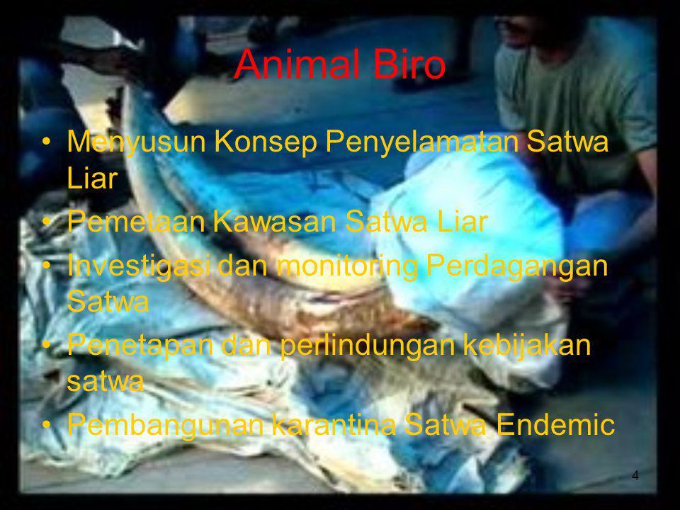 4 Animal Biro Menyusun Konsep Penyelamatan Satwa Liar Pemetaan Kawasan Satwa Liar Investigasi dan monitoring Perdagangan Satwa Penetapan dan perlindungan kebijakan satwa Pembangunan karantina Satwa Endemic