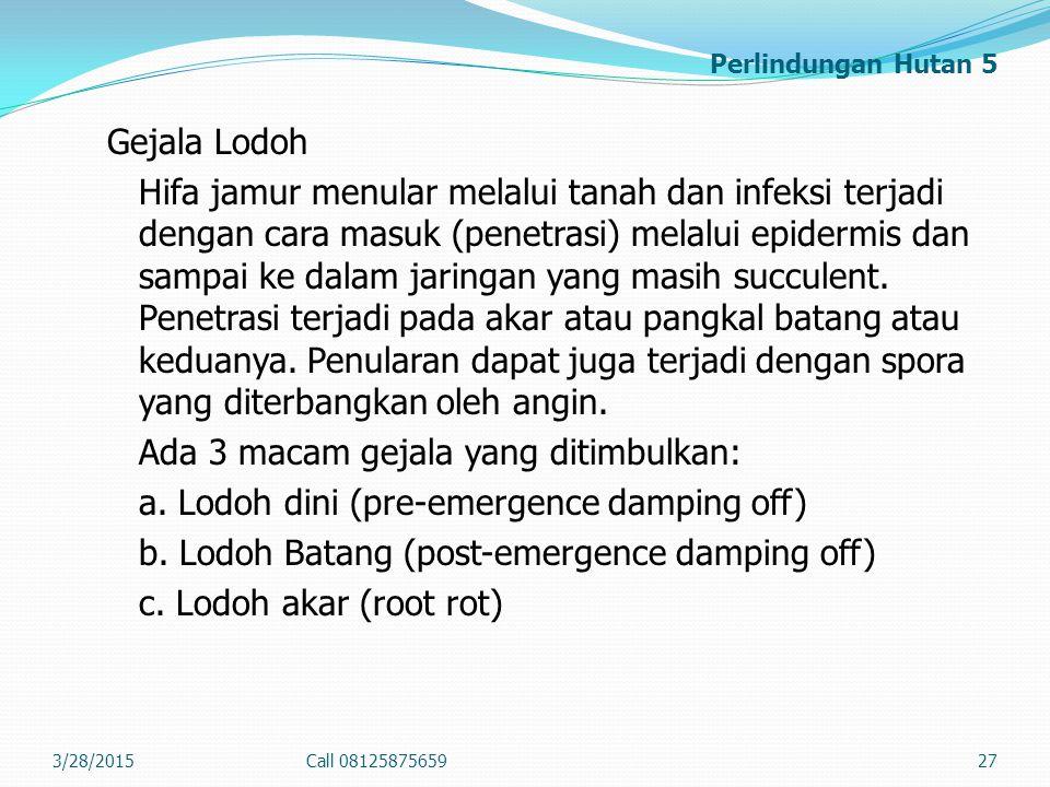 Perlindungan Hutan 5 Gejala Lodoh Hifa jamur menular melalui tanah dan infeksi terjadi dengan cara masuk (penetrasi) melalui epidermis dan sampai ke d