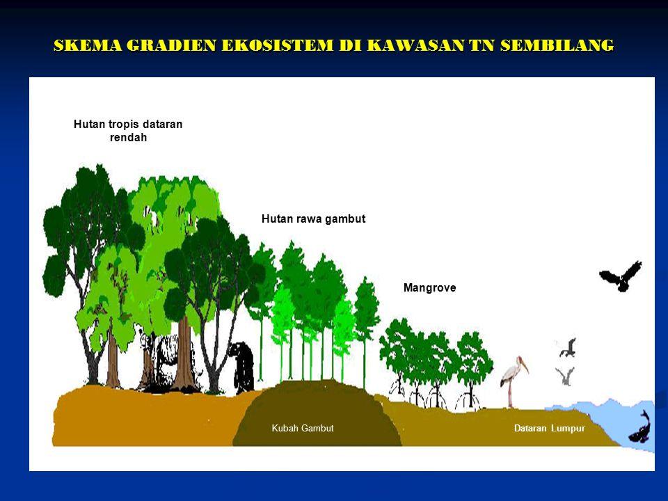SKEMA GRADIEN EKOSISTEM DI KAWASAN TN SEMBILANG Hutan tropis dataran rendah Hutan rawa gambut Mangrove Kubah GambutDataran Lumpur