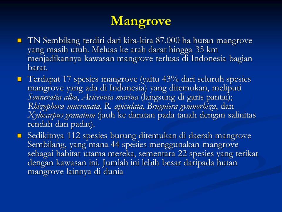 Mangrove TN Sembilang terdiri dari kira-kira 87.000 ha hutan mangrove yang masih utuh. Meluas ke arah darat hingga 35 km menjadikannya kawasan mangrov