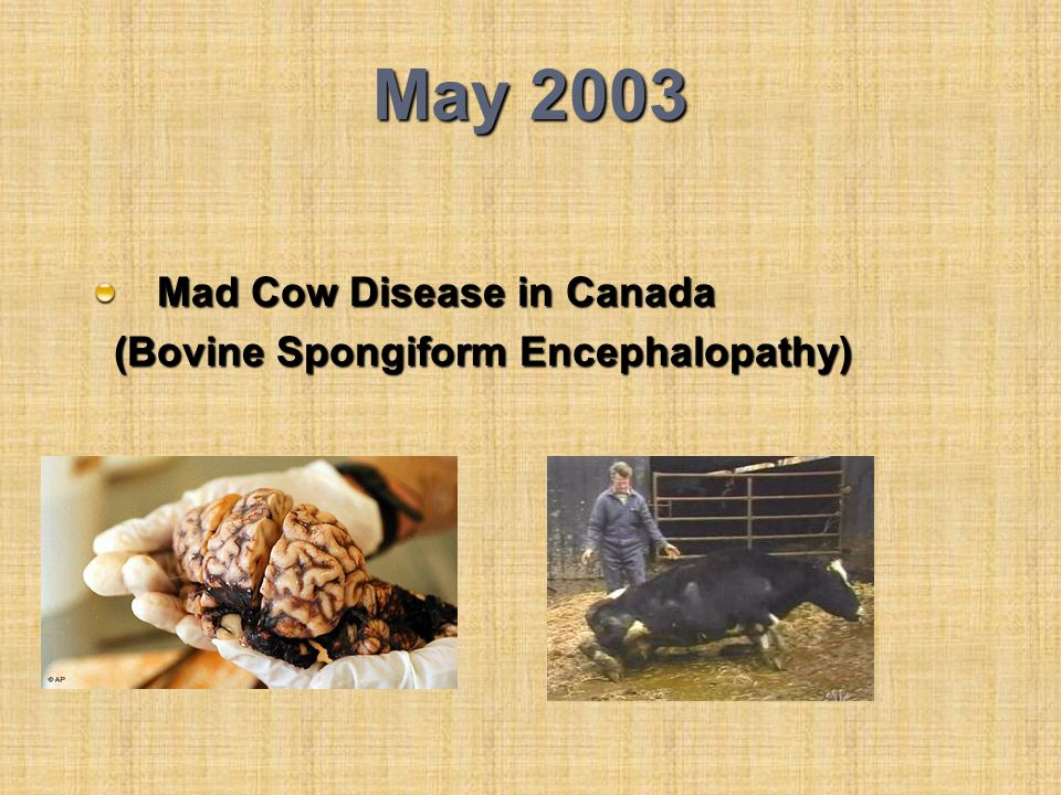 May 2003 Mad Cow Disease in Canada (Bovine Spongiform Encephalopathy) (Bovine Spongiform Encephalopathy)