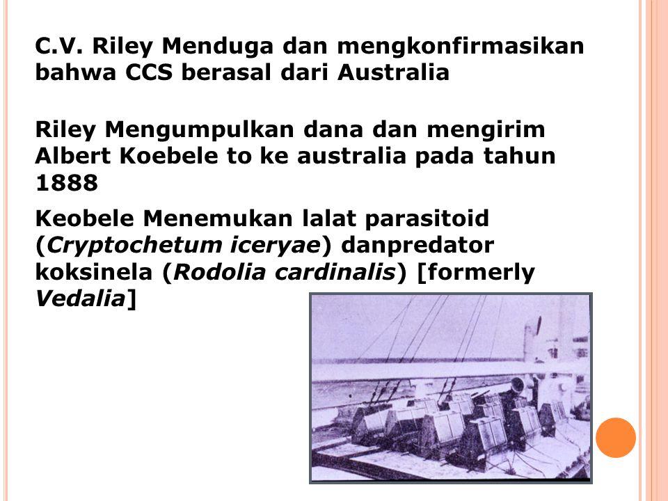C.V. Riley Menduga dan mengkonfirmasikan bahwa CCS berasal dari Australia Riley Mengumpulkan dana dan mengirim Albert Koebele to ke australia pada tah