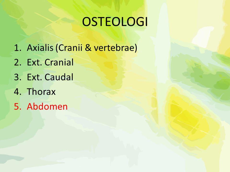OSTEOLOGI 1.Axialis (Cranii & vertebrae) 2.Ext. Cranial 3.Ext. Caudal 4.Thorax 5.Abdomen