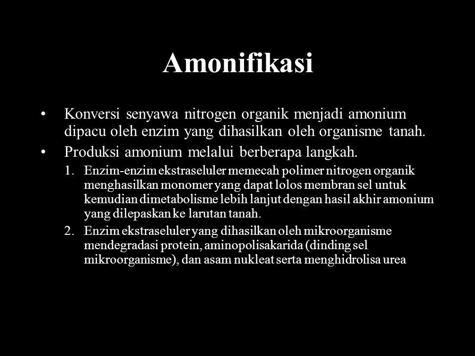 Amonifikasi Konversi senyawa nitrogen organik menjadi amonium dipacu oleh enzim yang dihasilkan oleh organisme tanah. Produksi amonium melalui berbera