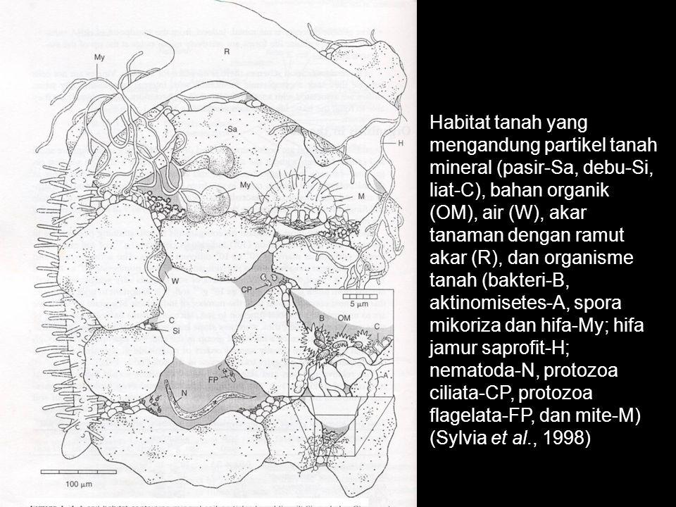 Skema agregat tanah (Sylvia et al., 1998) debu liat pasir Aktinomisetes Bahan Organik Bakteri