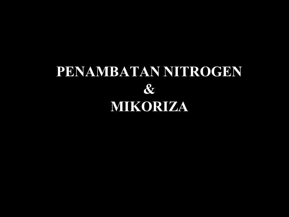 PENAMBATAN NITROGEN & MIKORIZA