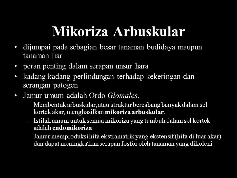 Mikoriza Arbuskular dijumpai pada sebagian besar tanaman budidaya maupun tanaman liar peran penting dalam serapan unsur hara kadang-kadang perlindunga
