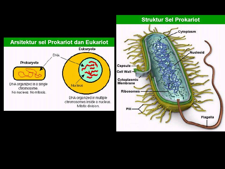 Arsitektur sel Prokariot dan Eukariot Struktur Sel Prokariot