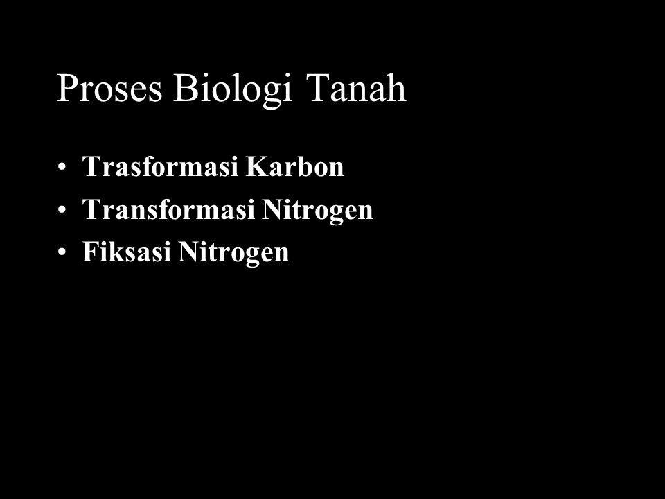 Proses Biologi Tanah Trasformasi Karbon Transformasi Nitrogen Fiksasi Nitrogen