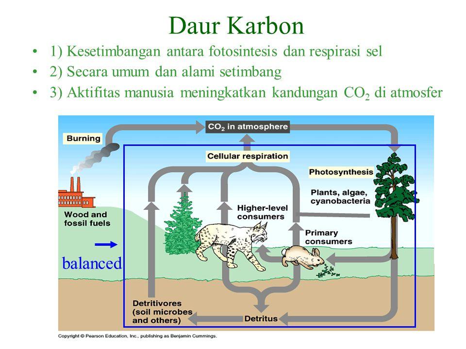 balanced Daur Karbon 1) Kesetimbangan antara fotosintesis dan respirasi sel 2) Secara umum dan alami setimbang 3) Aktifitas manusia meningkatkan kandungan CO 2 di atmosfer