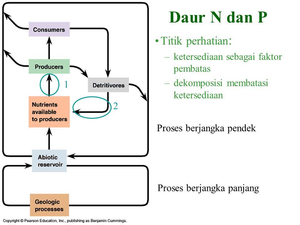 Daur N dan P Titik perhatian : –ketersediaan sebagai faktor pembatas –dekomposisi membatasi ketersediaan Proses berjangka panjang Proses berjangka pendek 1 2