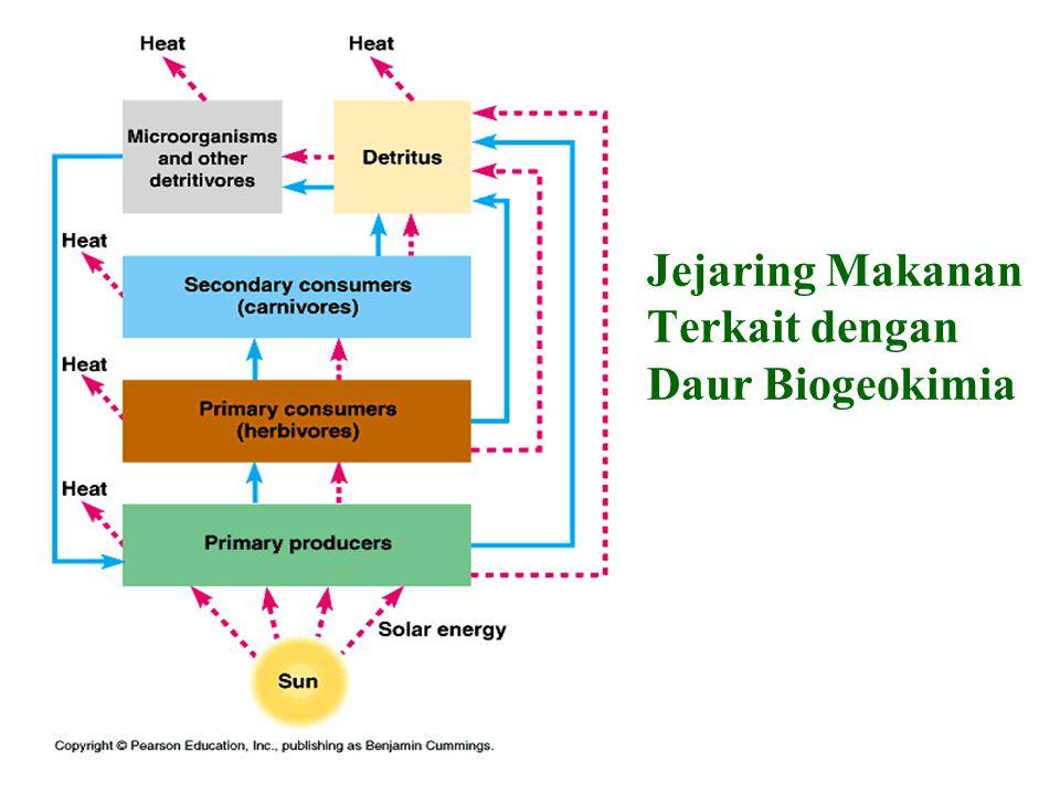 Jejaring Makanan Terkait dengan Daur Biogeokimia