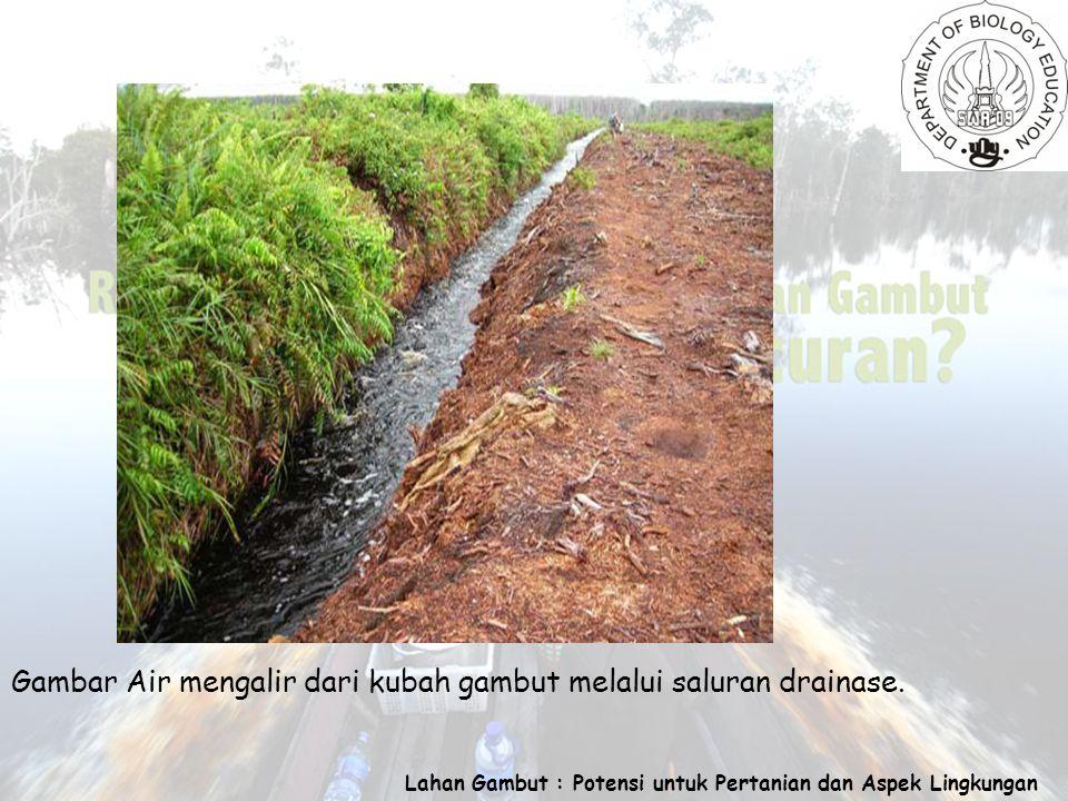 Lahan Gambut : Potensi untuk Pertanian dan Aspek Lingkungan Gambar Air mengalir dari kubah gambut melalui saluran drainase.