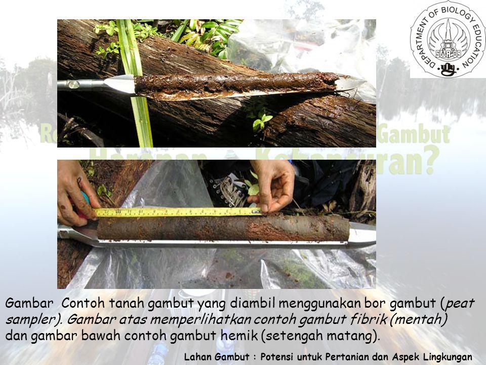 Lahan Gambut : Potensi untuk Pertanian dan Aspek Lingkungan Gambar Contoh tanah gambut yang diambil menggunakan bor gambut (peat sampler).