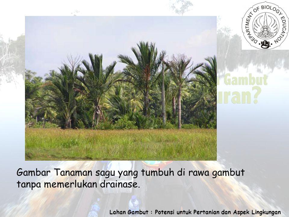 Lahan Gambut : Potensi untuk Pertanian dan Aspek Lingkungan Gambar Tanaman sagu yang tumbuh di rawa gambut tanpa memerlukan drainase.